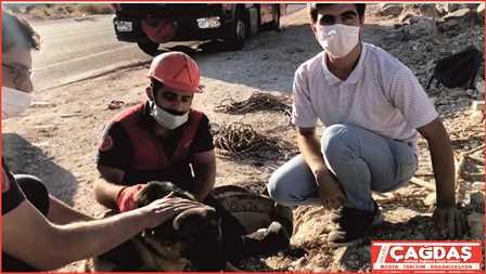 Dedaş'a ait Rögar Kuyusuna düşen köpek kurtarıldı