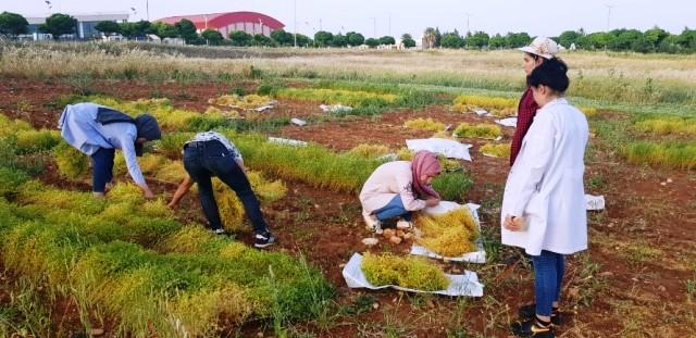 Harran Üniversitesi, Tarımda Yeniliklerin Öncüsü Olmaya Devam Ediyor