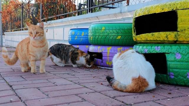 Kedi Evi Projesini Hayata Geçirdi