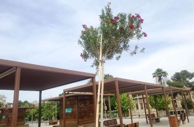 Rabia Meydanı'na yeni ağaçlar dikildi