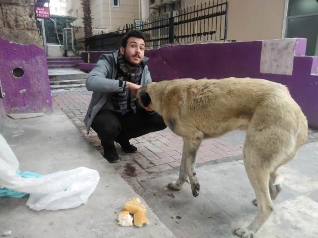 Yaralı köpeğe vicdanlı Muhtar sahip çıktı