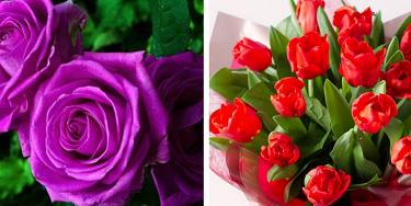 Yaşlıların sağlığı için çiçek ve hediye göndermeyin