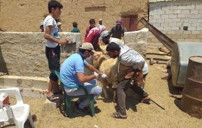 Barış Pınarı Bölgesinde Tarım ve Hayvancılık Destekleniyor