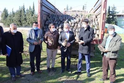 Bozova'da çiftçilere fidan dağıtıldı