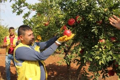 Büyükşehir'den meyve ikramı