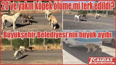 Hayvan Barınağı köpekleri başıboş araziye bıraktı