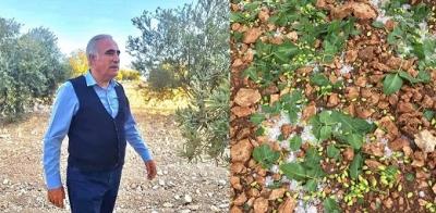 Milletvekili Aydınlık: Çiftçinin Ayakta Duracak Hali Kalmadı