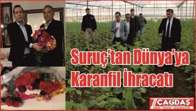 Suruç'tan Dünya'ya karanfil ihracatı…