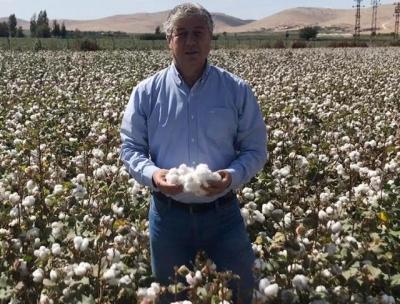 Urfa'da pamuk üretimi azalıyor