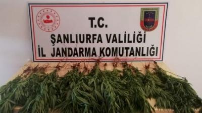 Urfa'da uyuşturucu operasyonu: 7 kişi tutuklandı!