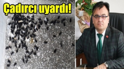 Urfa'yı karafatmalar bastı